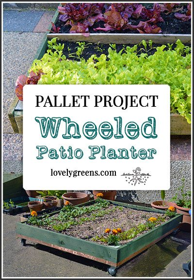 Wheeled Pallet Planter + DIY Instructions: maximize patio space with this wheeled pallet planter. You can roll it into and out of areas and keep the sun shining on it all day.