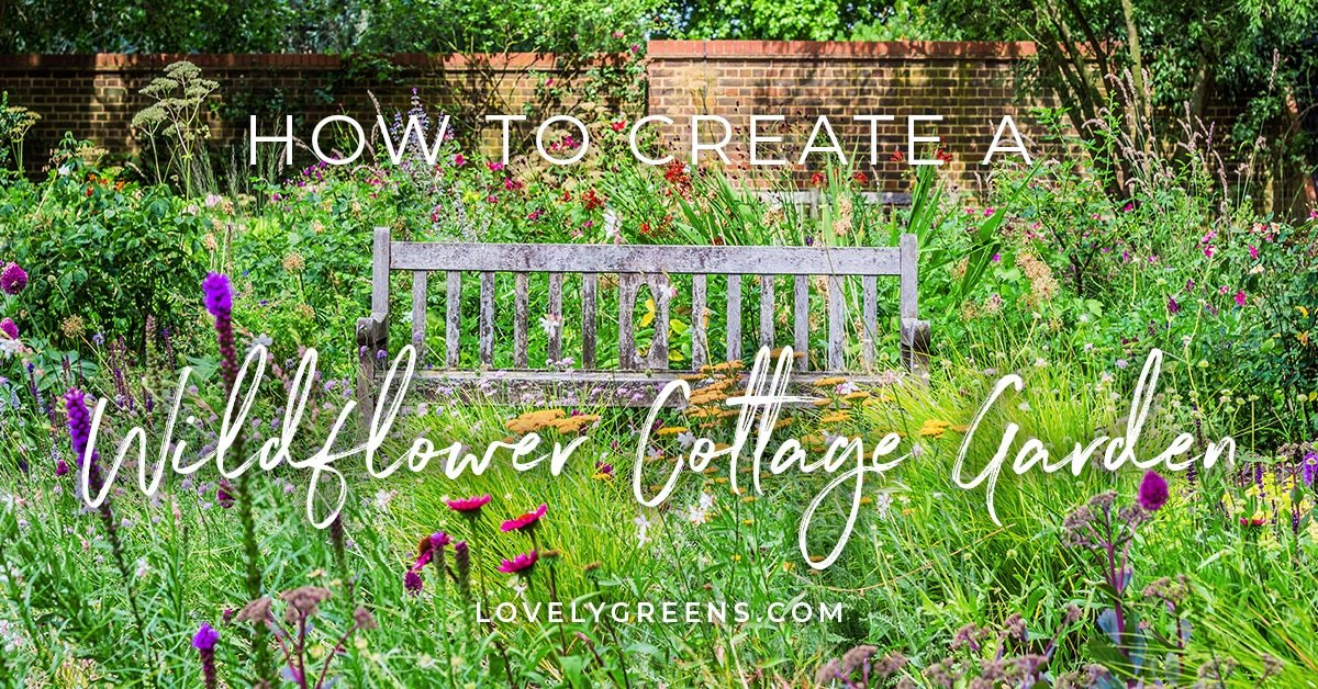 How to grow a Wildflower Cottage Garden - Lovely Greens