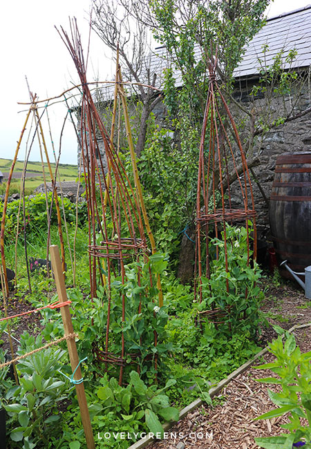 April garden jobs including what seeds to sow, crops to harvest, inspirational garden projects, and seasonal tasks for the vegetable garden #gardeningtips #vegetablegarden #springgarden