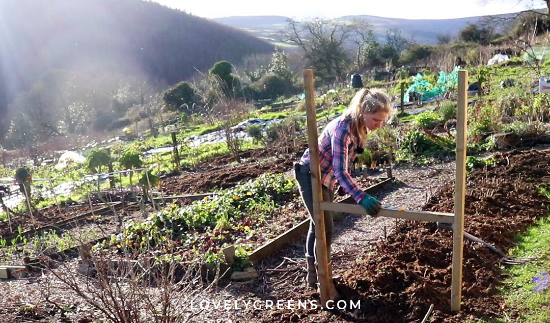 20 Winter garden projects for the vegetable garden including the earliest seeds to sow, forcing rhubarb, recycled garden projects, pruning, and more #gardeningtips #vegetablegarden #diygarden