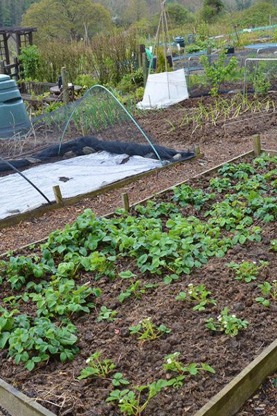 Permanent garden paths reduce weeding and mowing time -- they can also be easy, quick, and inexpensive to make. Here's instructions on how to make wood chip garden paths and why they're such a great option #lovelygreens #vegetablegarden #diygarden