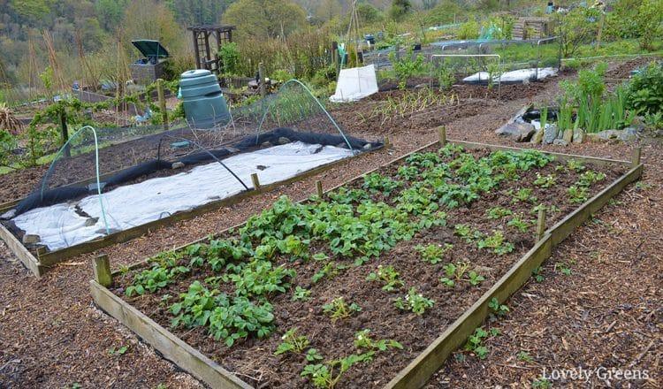 Budget Gardening Idea: Create Wood Chip Garden Paths