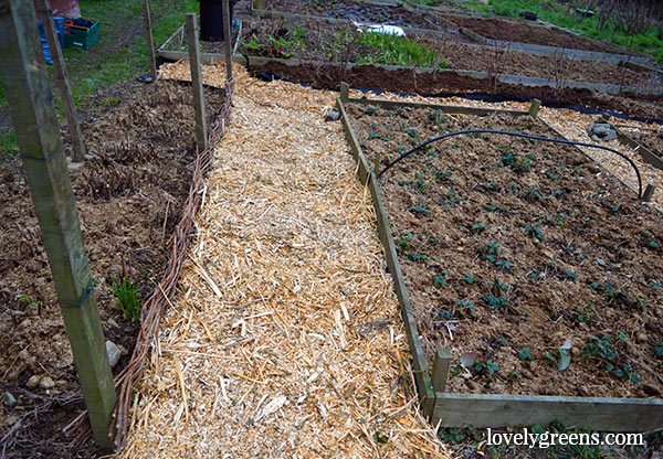 Frugal gardening idea create wood chip garden paths