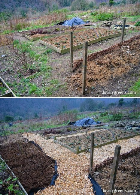Budget Gardening Idea Create Wood Chip Garden Paths Lovely Greens